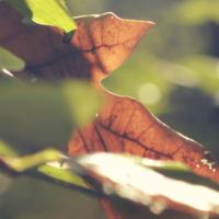 Brunt blad kan hjælpe til indre kraft